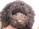 子犬0711140-3