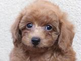 子犬0711140-2