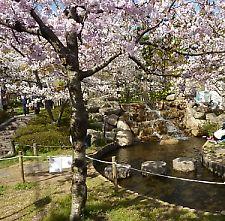 t_P1010492  公園