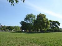 ふれあい緑地横公園 20200522 t_P1150502
