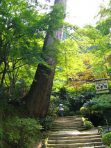 清水寺 苔のある風景