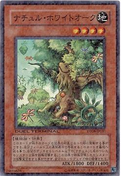 card73708074_1