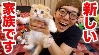 彡(^)(^)「なんか耳折れた猫産まれたで!増やしたろ!」