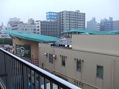 亀戸サンストリート