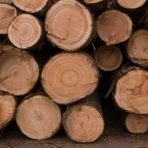材木店の原木置き場