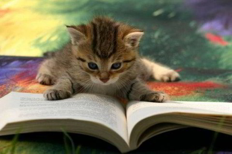 cat-reading-book