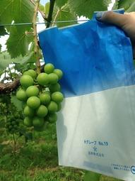 竜宝の青い袋
