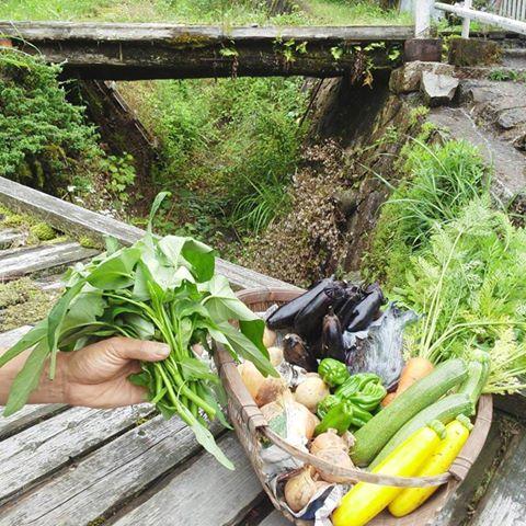 Farm Rootsが定期便の前にお試し便をおススメしている理由