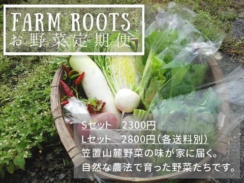新鮮野菜を畑から直送!お野菜詰め合わせセットについて