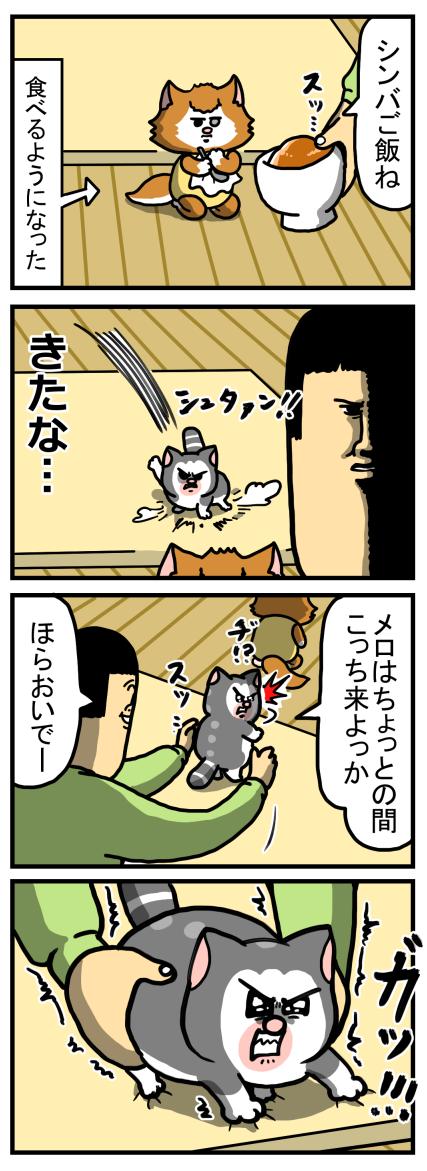 五輪ジョイントマット持ち上げ選手権(猫協力型)