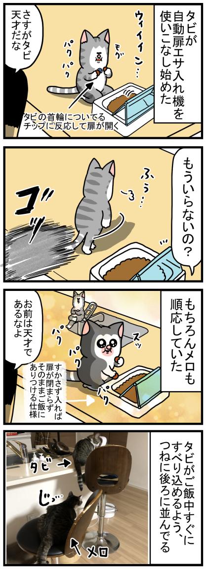 欲張り猫に巻き起こる悲劇