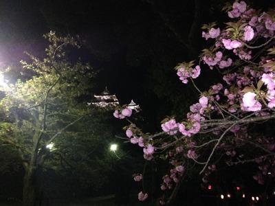 夜和歌山城JPG