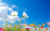 w621_flower39[1]