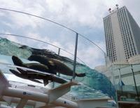 水族館2TR2011081000091[1]