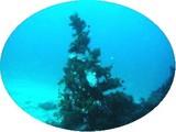 【水中のクリスマスツリー】見てみたくない?!