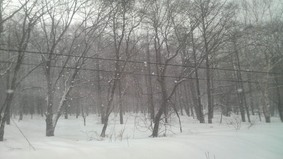 雪の世界♪