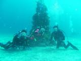 クリスマスダイビング