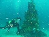 クリスマスツリーその1