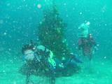 クリスマスツリーその2