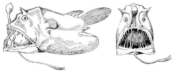 """魚類学者「さかなクン」でも知らない魚は存在する —— 水の世界に息づく""""いのち""""に魅せられた人々"""