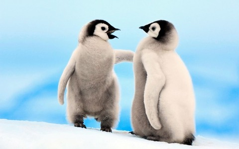 Young-Emperor-Penguins-600x375