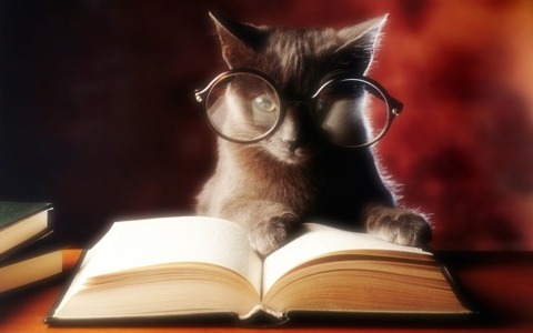Cat-with-Reading-Glasses-and-Open-Book-600x375