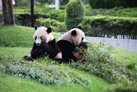 20120827_panda