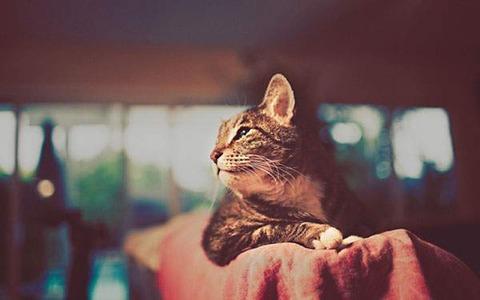 wallpaper-beautiful-cat-10