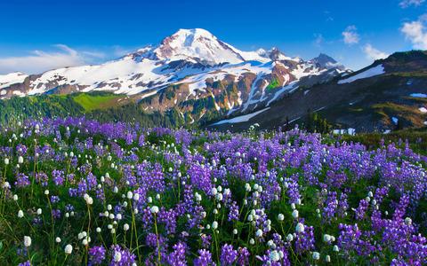 hermoso-campo-de-flores-moradas-3233