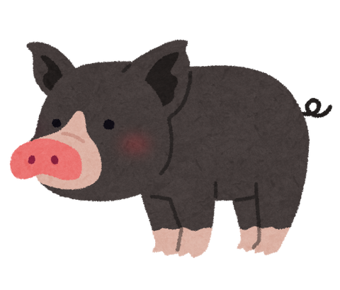 animal_kurobuta_pig