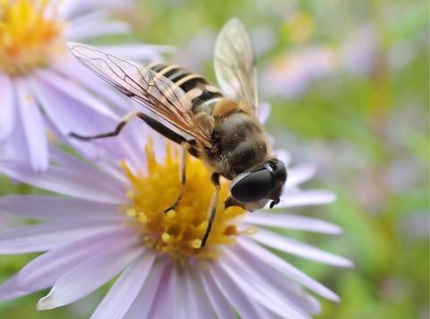 autumn_bee