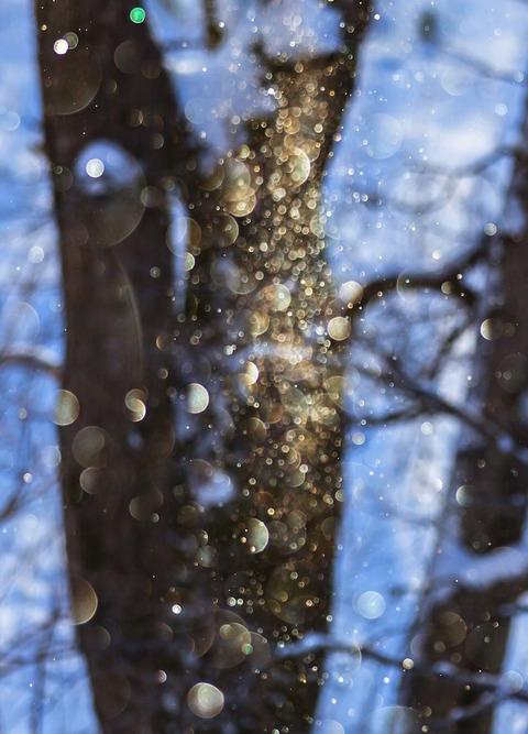 Winter fairies 4