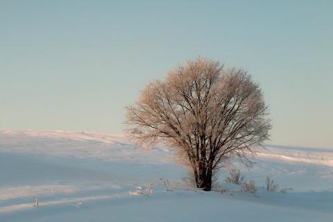霧氷桜ss