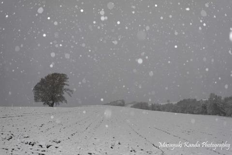 Tree8(初雪の朝)_ks