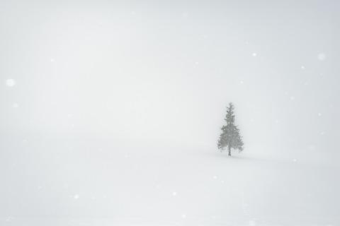 霧中雪が降る
