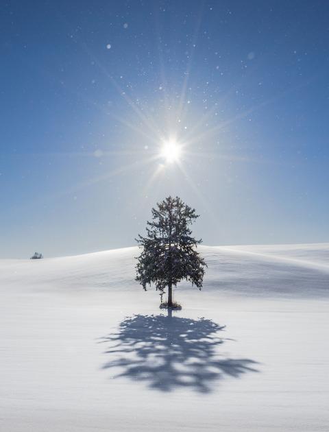 春よ来い 「Merry Christmas !」