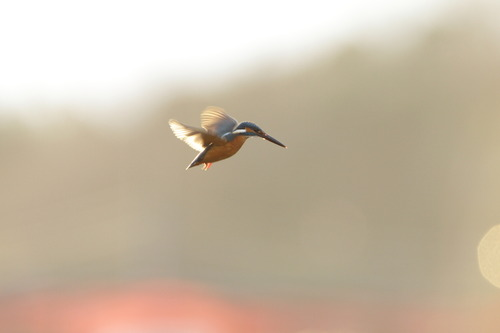 30-second hovering (8pics)
