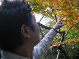 041103箱根ドライブ紅葉黄色