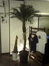 040824観葉植物
