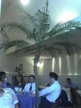 040715ヤシの木