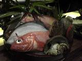 050117IMURIお魚