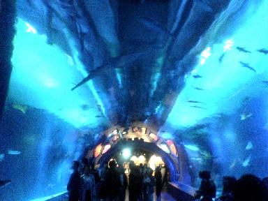 050515品川水族館トンネル.jpg