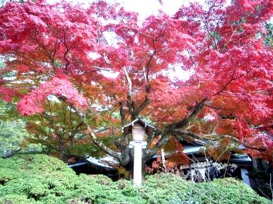 071202鎌倉紅葉.jpg