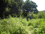 秋の草刈り06-1
