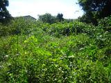 秋の草刈り06-2