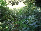 秋の草刈り06-3