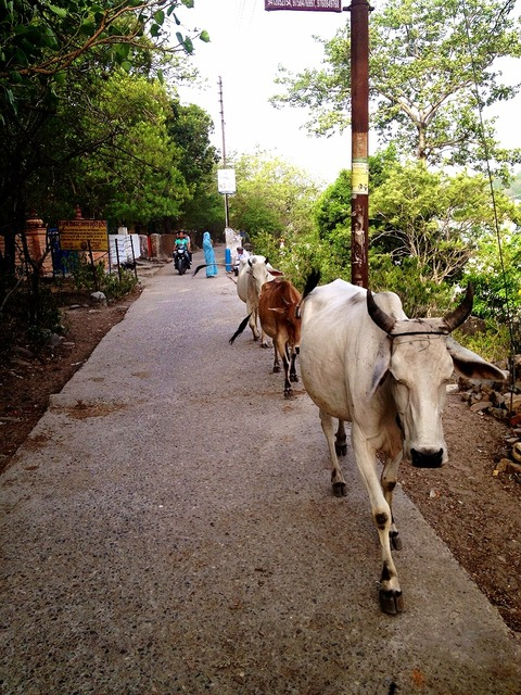 インドで1ヶ月間ベジタリアン生活をしてみて感じたこと