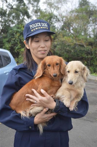 【朗報】ダックスフンドが警察犬に指定される