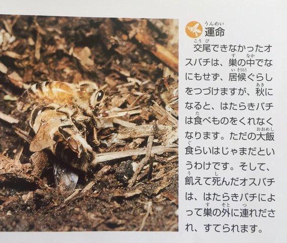 【画像】交尾できなかったオスバチの末路
