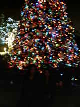 Front of tree
